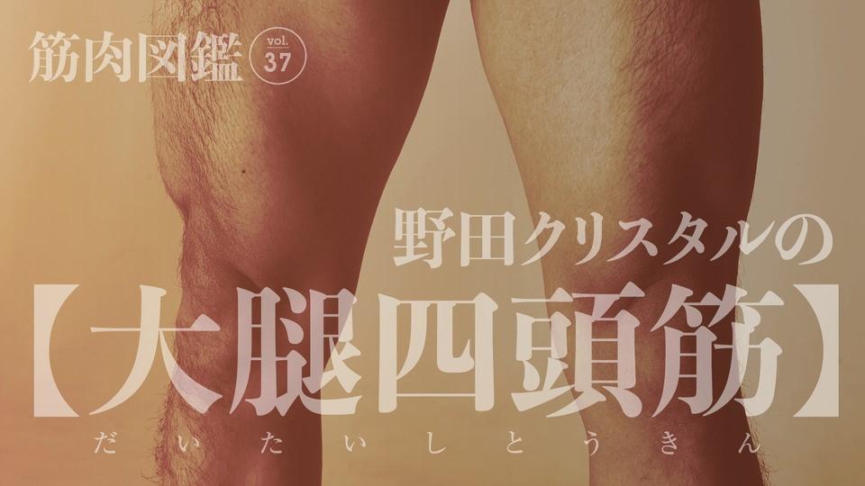 野田クリスタルの筋肉